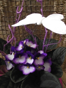 violetas floristeria garralda (7)
